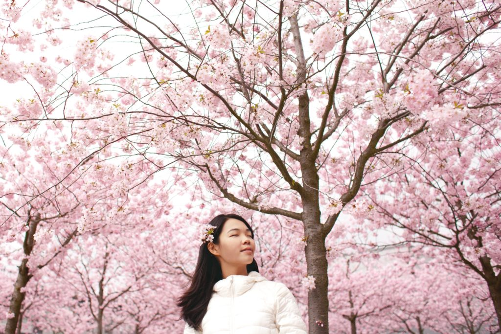 Beautiful woman in cherry blossoms.